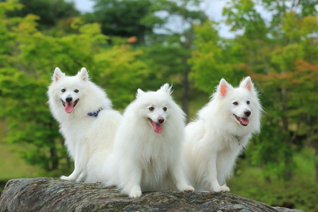Three dogs on a stone