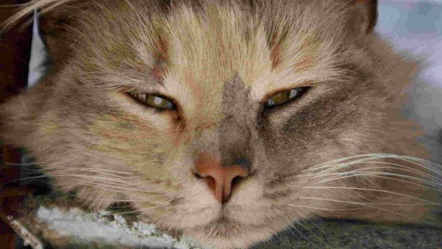 Воспаление у глаз у кошки