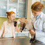 Симптомы блефарита у кошек