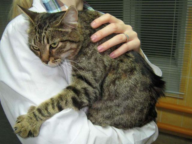 Кошка на руках у хозяйки