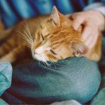 Особенности лечения гастрита у кошек