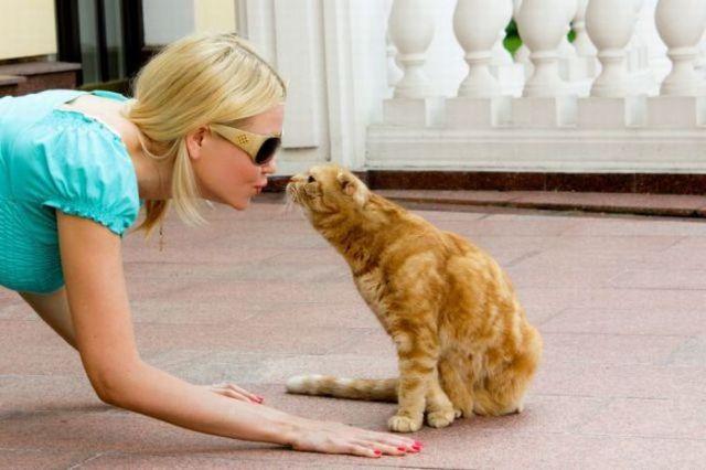 Кошка нюхает хозяйку