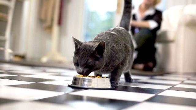 Кошка ест из миски