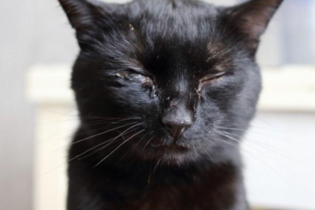 Выделение из глаз кота
