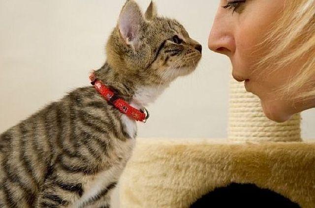 Кошка нюхает кошку