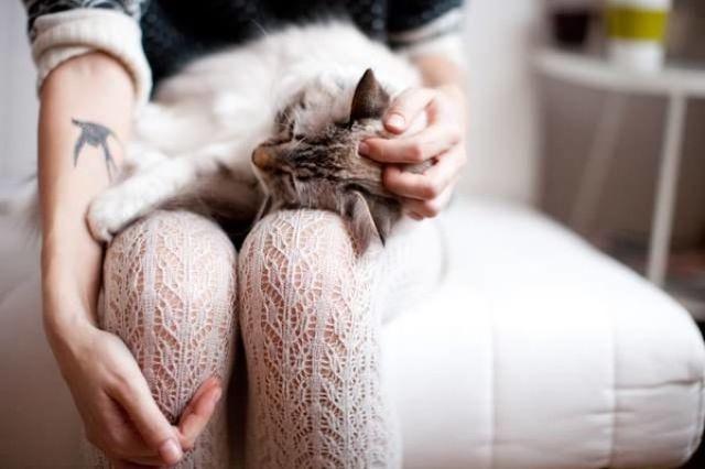 Кот лежит на коленях