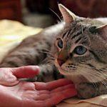 Недержание мочи у кошки: что делать?