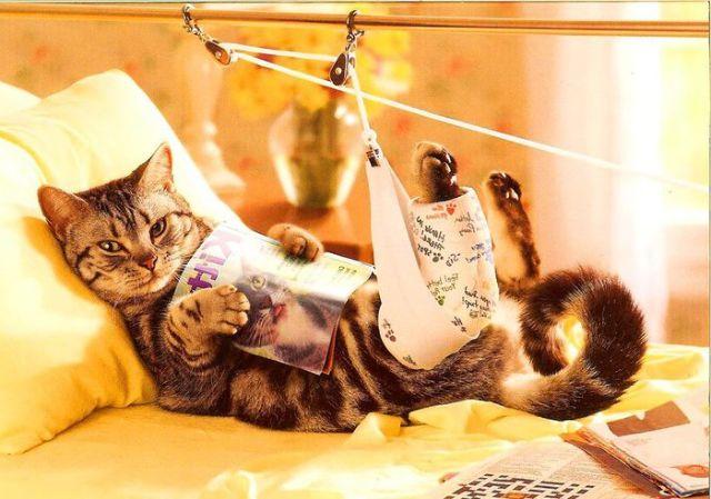 Кошка лежит с журналом