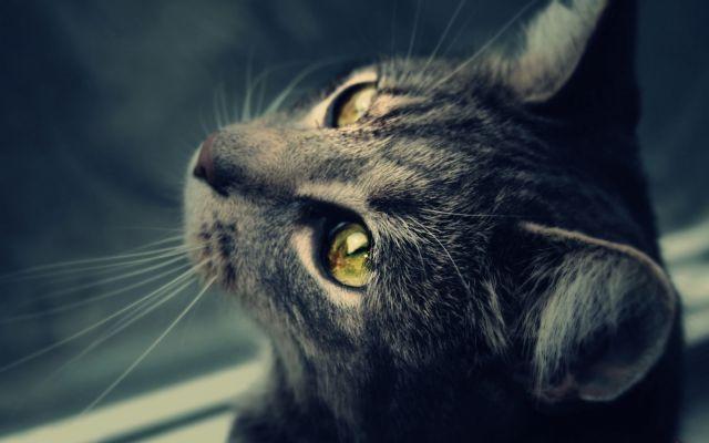 Кошка смотри вверх