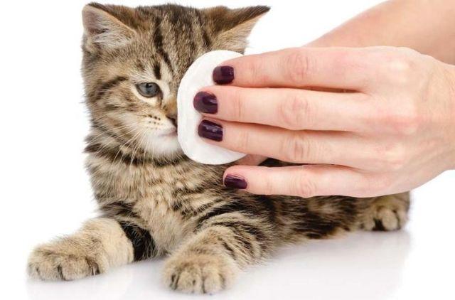 Котенку протирают глаз