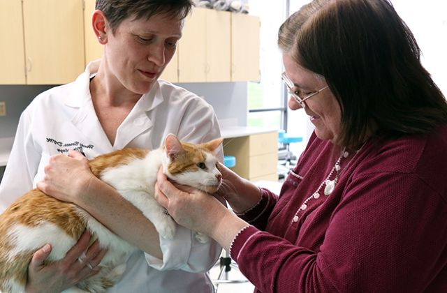 Хозяйка с котом у врача