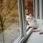 Эффективные способы лечения грыжи у котов