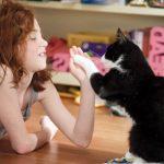 СПИД у кота – не приговор