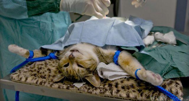 Операция коту