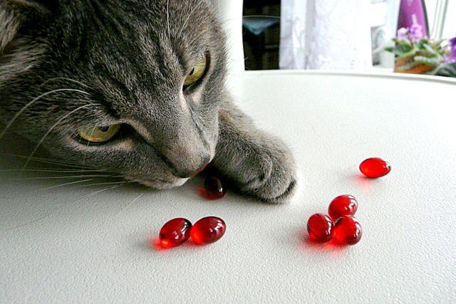 Кошка нюхает таблетки