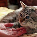 Можно ли спасти кошку при отеке легких?