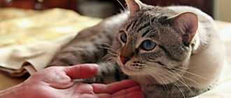 Хозяйка гладит кошку