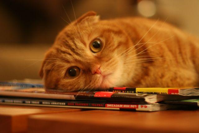 Кот лежит на журналах