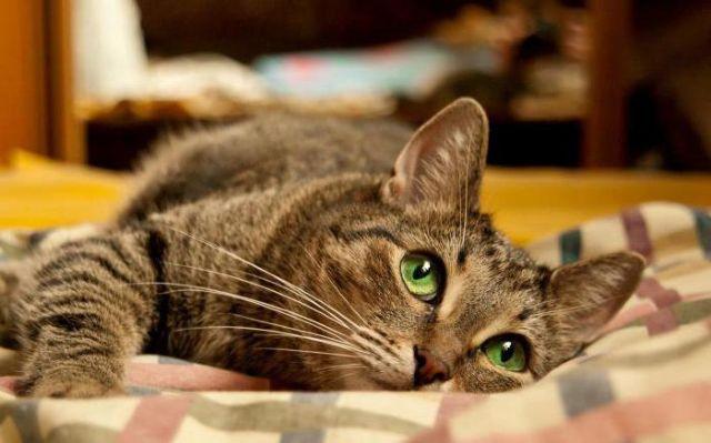 Кот грустно смотрит
