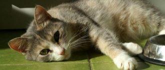 Кот лежит на зеленом полу