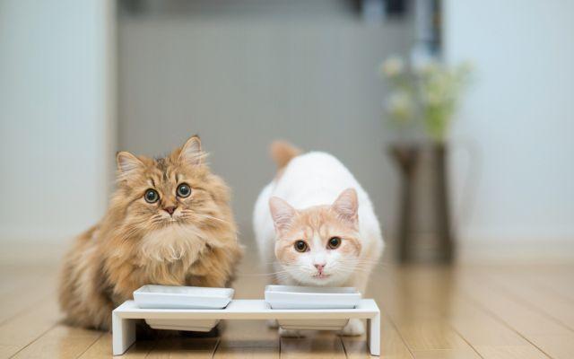 Два кота едят