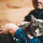 Опасность поликистоза у кошек