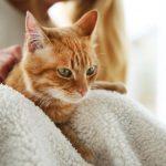У кошки сахарный диабет: как лечить?