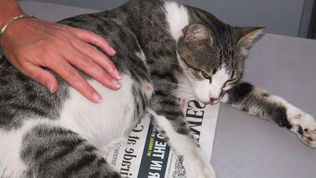Кот лежит на газетке