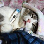 Как померять и снять температуру у кошки