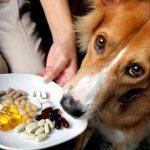 Какие витамины выбрать собаке