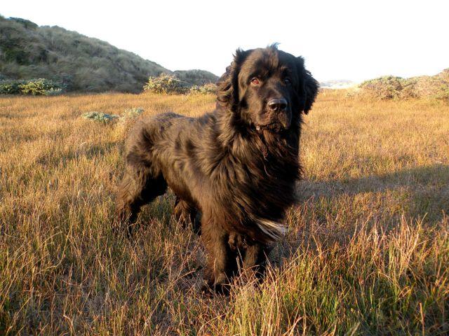 Пес в поле