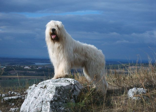 Собака на камне