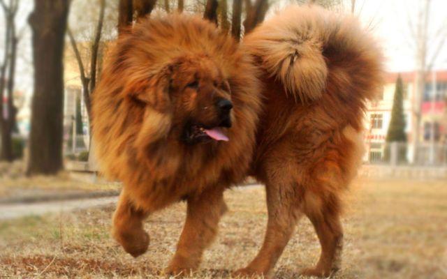Лохматый пес в парке