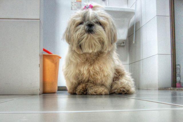 Пес сидит на кафельном полу