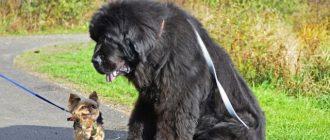Большая и маленькая собаки на дороге