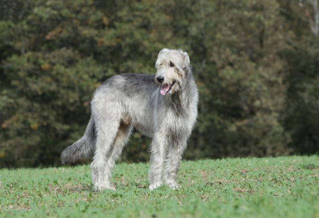 Собака на опушке леса