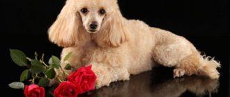 Собака с розами