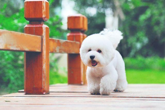 Собака бежит по веранде