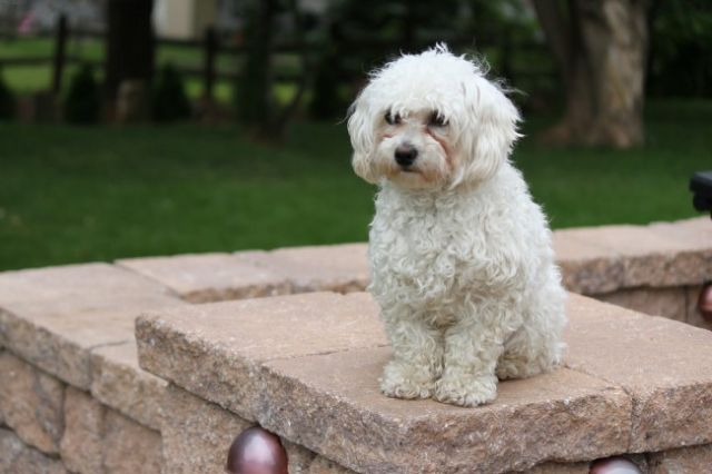 Пес сидит на каменных перилах
