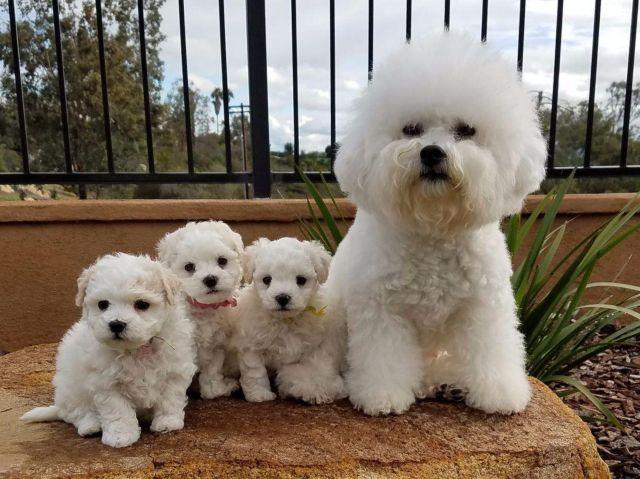 Собака с щенками