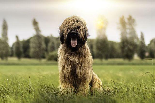 Пес сидит на траве