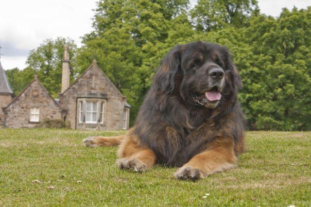 Пес лежит на траве