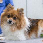 Типичные болезни мелких пород собак