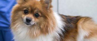 Собака рядом с ветеринаром