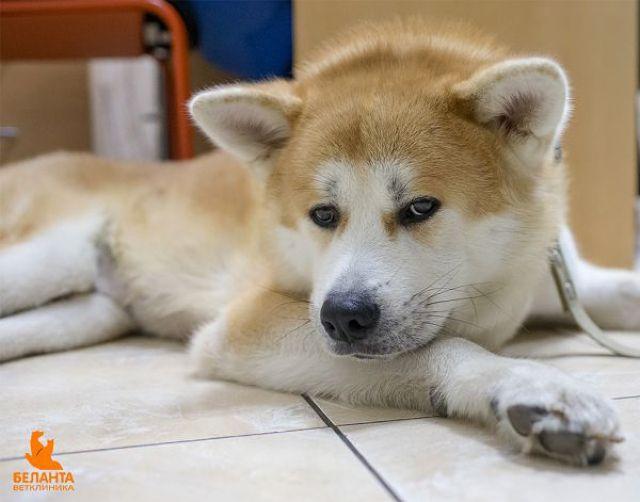 Пес лежит на кафеле