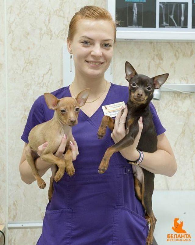 Девушка держит двух собак