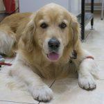 Эффективные способы лечения болезни почек у собак