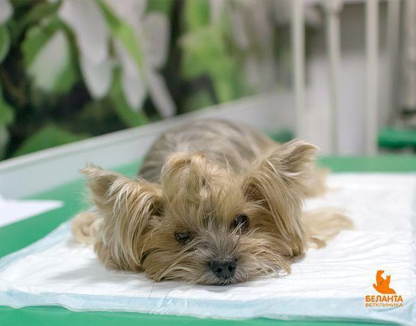 Пес лежит на кушетке