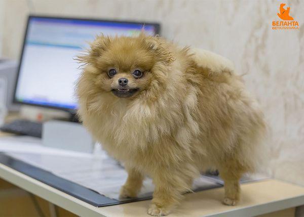 Собака стоит на столе
