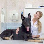 Надо ли лечить полипы в мочевом пузыре у собак